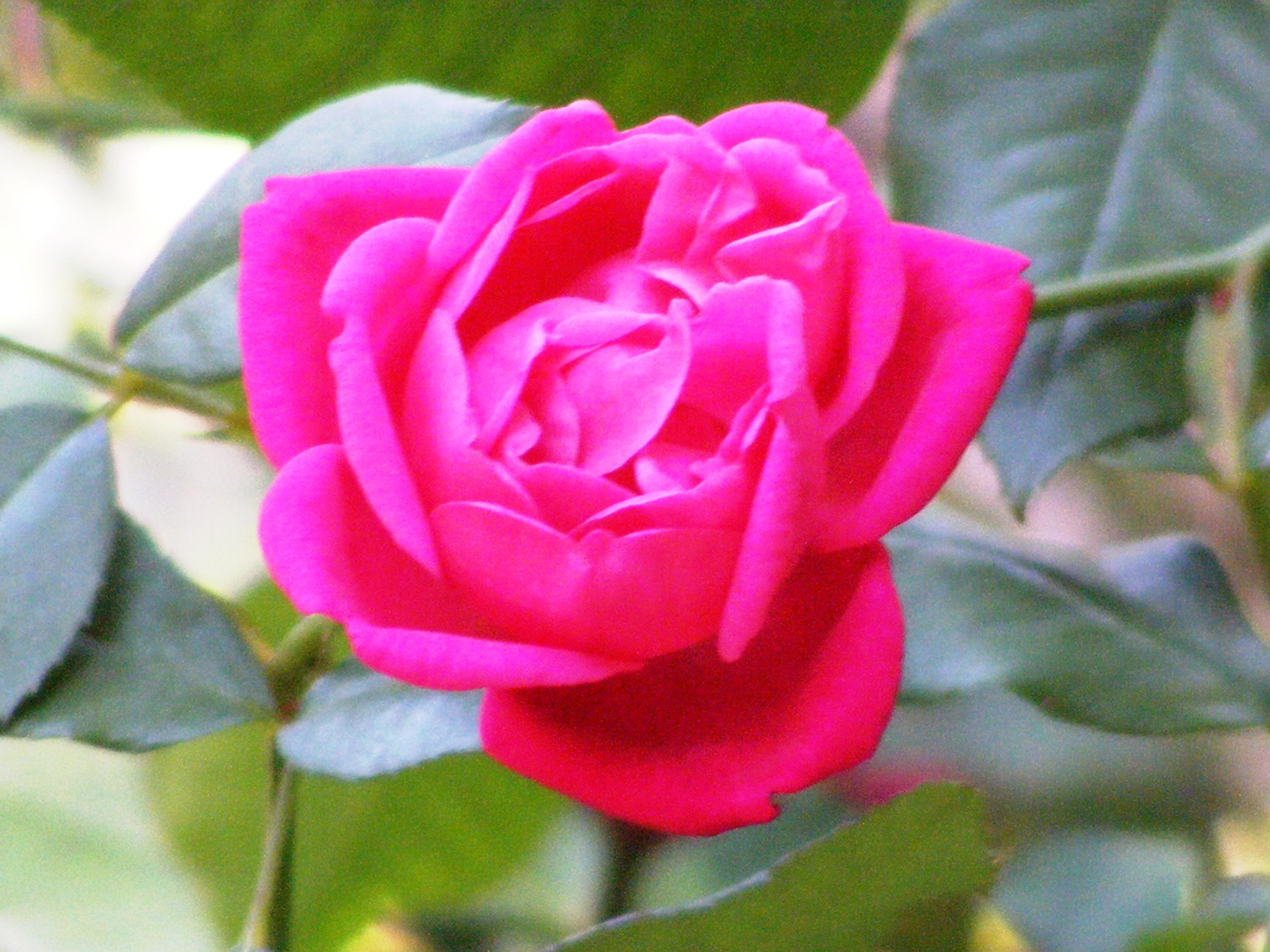 McKEE Botanical Garden 098