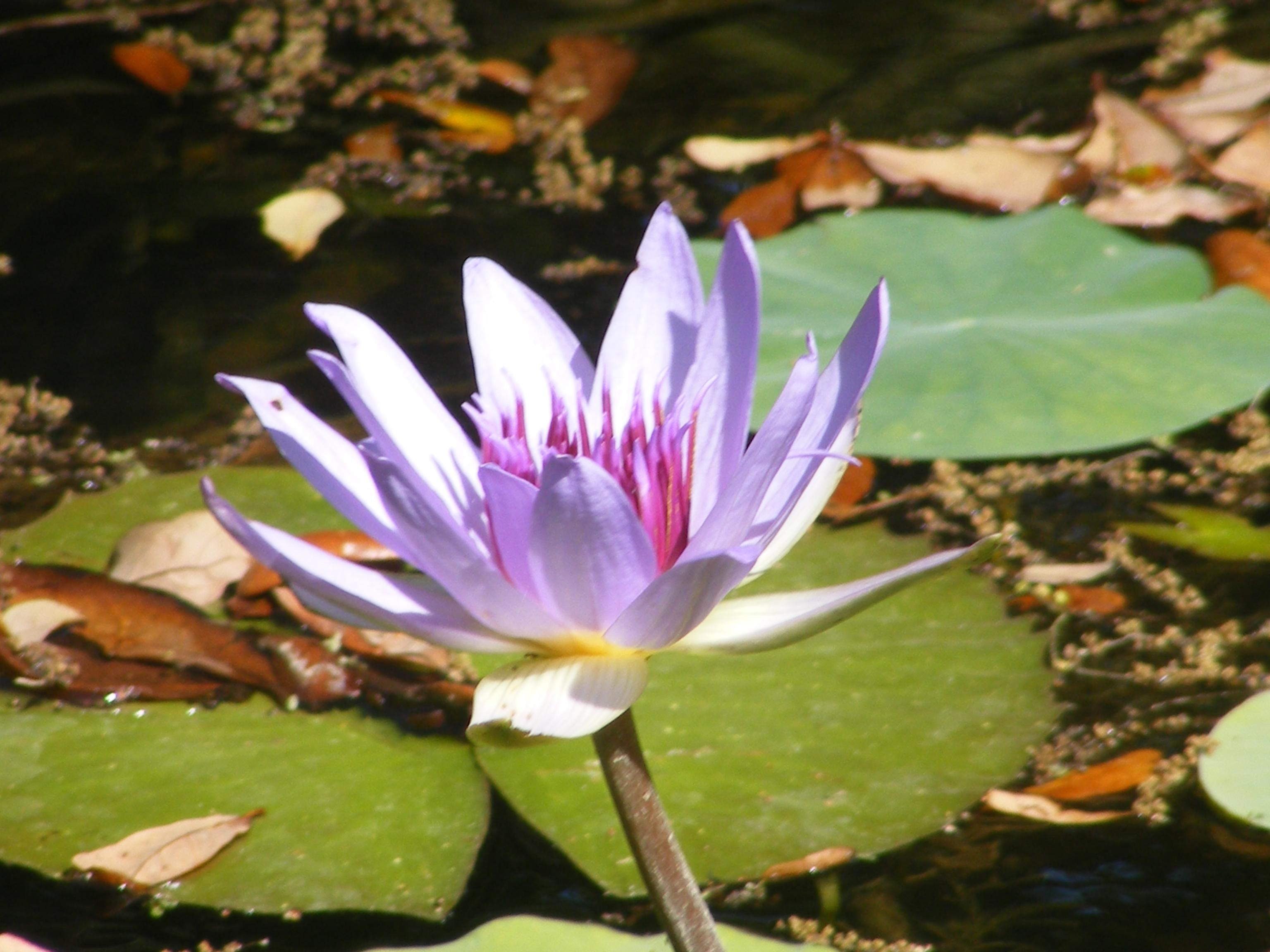 McKEE Botanical Garden 133